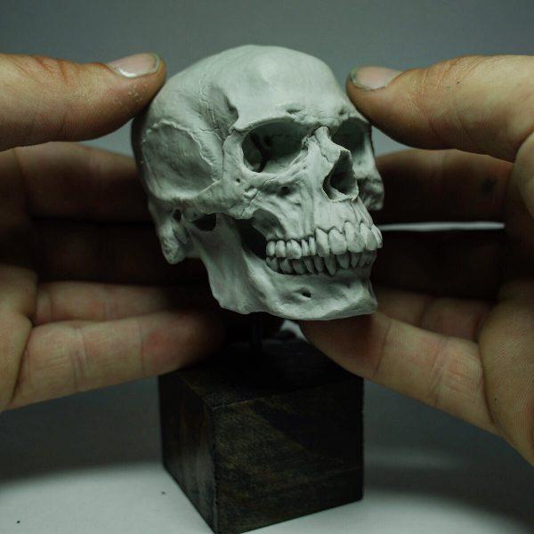 skull, cranium, crane, head, osteology, bone